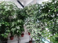 Artificial plant -trees